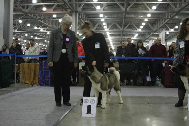 Евразия-2011